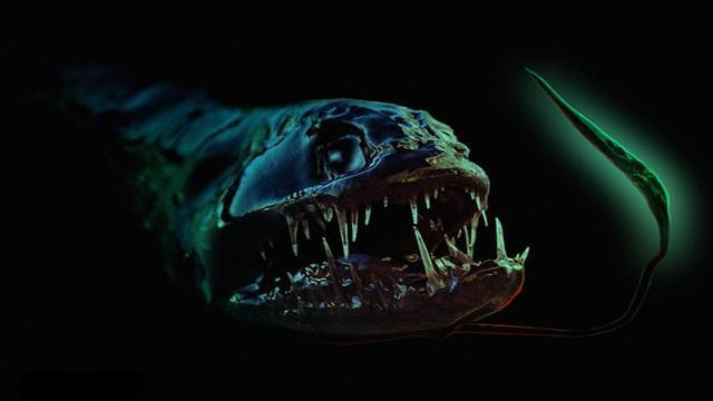Peixe-dragão