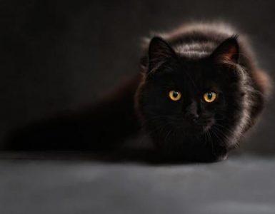 Gato tem 7 vidas mesmo